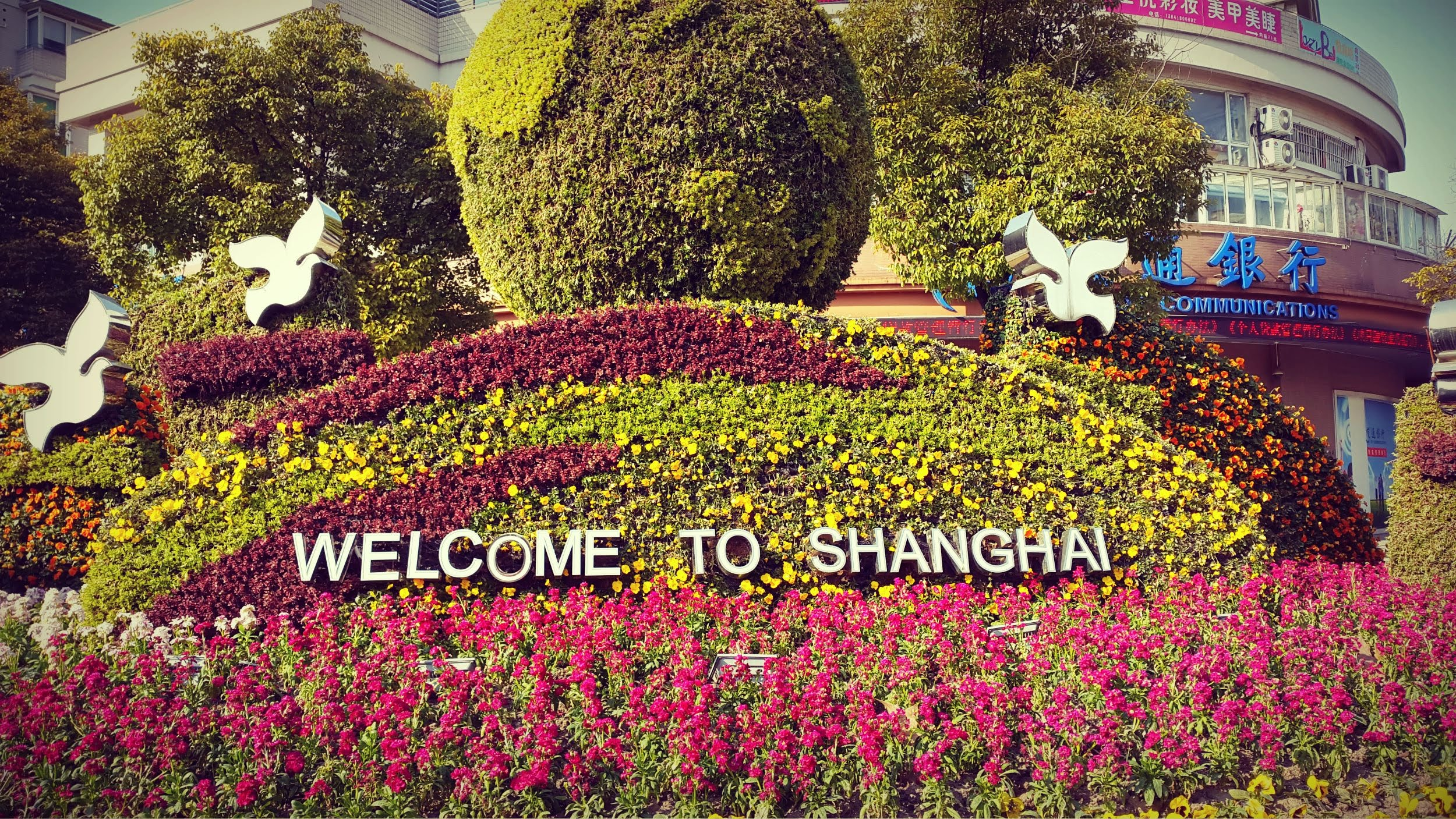 AIESEC OGCDP (Out Going exChange Development Program) to Shanghai, China